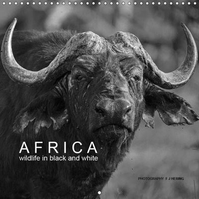 AFRICA wildlife in black and white (Wall Calendar 2019 300 × 300 mm Square), Franz Josef Hering