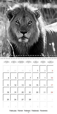 AFRICA wildlife in black and white (Wall Calendar 2019 300 × 300 mm Square) - Produktdetailbild 2