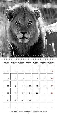 AFRICA wildlife in black and white (Wall Calendar 2019 300 × 300 mm Square) - Produktdetailbild 2