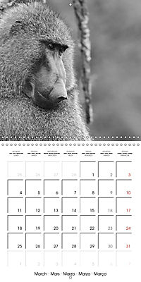 AFRICA wildlife in black and white (Wall Calendar 2019 300 × 300 mm Square) - Produktdetailbild 3