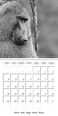 AFRICA wildlife in black and white (Wall Calendar 2019 300 × 300 mm Square) - Produktdetailbild 3