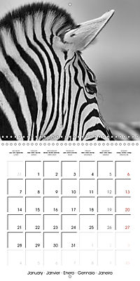 AFRICA wildlife in black and white (Wall Calendar 2019 300 × 300 mm Square) - Produktdetailbild 1