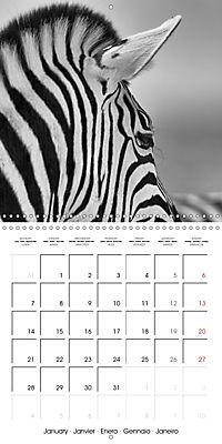 AFRICA wildlife in black and white (Wall Calendar 2019 300 × 300 mm Square) - Produktdetailbild 1