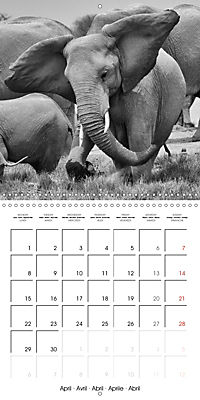 AFRICA wildlife in black and white (Wall Calendar 2019 300 × 300 mm Square) - Produktdetailbild 4