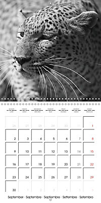 AFRICA wildlife in black and white (Wall Calendar 2019 300 × 300 mm Square) - Produktdetailbild 9