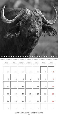 AFRICA wildlife in black and white (Wall Calendar 2019 300 × 300 mm Square) - Produktdetailbild 6