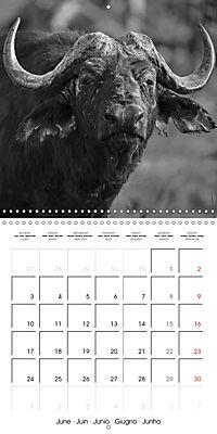 AFRICA wildlife in black and white (Wall Calendar 2019 300 × 300 mm Square) - Produktdetailbild 6