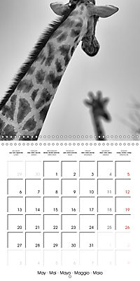 AFRICA wildlife in black and white (Wall Calendar 2019 300 × 300 mm Square) - Produktdetailbild 5