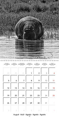 AFRICA wildlife in black and white (Wall Calendar 2019 300 × 300 mm Square) - Produktdetailbild 8