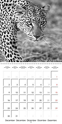 AFRICA wildlife in black and white (Wall Calendar 2019 300 × 300 mm Square) - Produktdetailbild 12