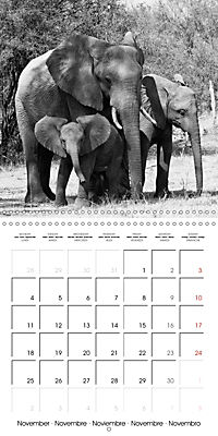 AFRICA wildlife in black and white (Wall Calendar 2019 300 × 300 mm Square) - Produktdetailbild 11