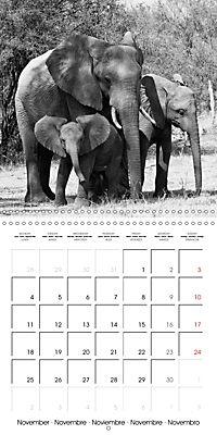 AFRICA wildlife in black and white (Wall Calendar 2019 300 × 300 mm Square) - Produktdetailbild 11