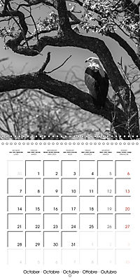 AFRICA wildlife in black and white (Wall Calendar 2019 300 × 300 mm Square) - Produktdetailbild 10