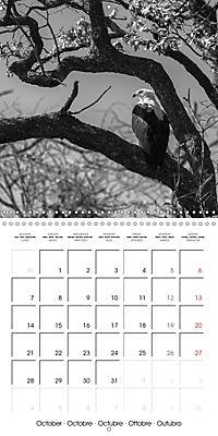 AFRICA wildlife in black and white (Wall Calendar 2019 300 × 300 mm Square) - Produktdetailbild 10