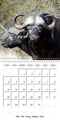 Africas wonderful animals (Wall Calendar 2019 300 × 300 mm Square) - Produktdetailbild 5