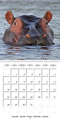 Africas wonderful animals (Wall Calendar 2019 300 × 300 mm Square) - Produktdetailbild 1
