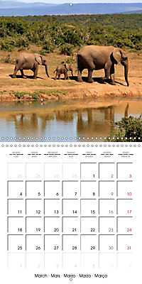 Africas wonderful animals (Wall Calendar 2019 300 × 300 mm Square) - Produktdetailbild 3