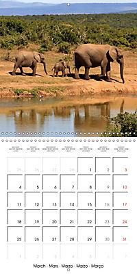 Africas wonderful animals (Wall Calendar 2019 300 × 300 mm Square) - Produktdetailbild 3