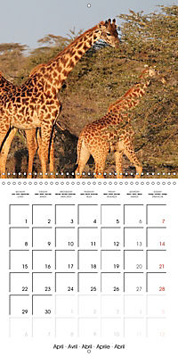 Africas wonderful animals (Wall Calendar 2019 300 × 300 mm Square) - Produktdetailbild 4