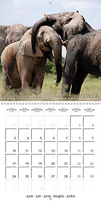 Africas wonderful animals (Wall Calendar 2019 300 × 300 mm Square) - Produktdetailbild 6