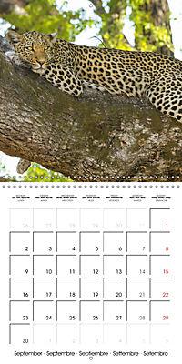 Africas wonderful animals (Wall Calendar 2019 300 × 300 mm Square) - Produktdetailbild 9