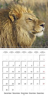 Africas wonderful animals (Wall Calendar 2019 300 × 300 mm Square) - Produktdetailbild 12