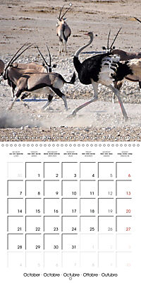 Africas wonderful animals (Wall Calendar 2019 300 × 300 mm Square) - Produktdetailbild 10