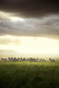 Afrika - Das magische Königreich - Produktdetailbild 10