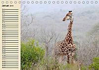 Afrika. Tiere in freier Wildbahn (Tischkalender 2019 DIN A5 quer) - Produktdetailbild 1