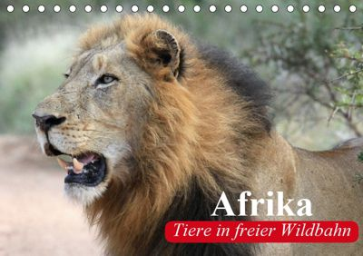 Afrika. Tiere in freier Wildbahn (Tischkalender 2019 DIN A5 quer), Elisabeth Stanzer