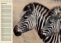Afrika. Tiere in freier Wildbahn (Tischkalender 2019 DIN A5 quer) - Produktdetailbild 6