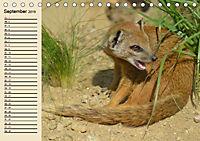 Afrika. Tiere in freier Wildbahn (Tischkalender 2019 DIN A5 quer) - Produktdetailbild 9