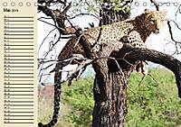 Afrika. Tiere in freier Wildbahn (Tischkalender 2019 DIN A5 quer) - Produktdetailbild 5