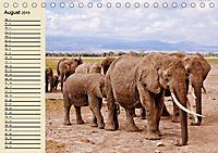 Afrika. Tiere in freier Wildbahn (Tischkalender 2019 DIN A5 quer) - Produktdetailbild 8