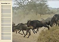 Afrika. Tiere in freier Wildbahn (Wandkalender 2019 DIN A3 quer) - Produktdetailbild 11