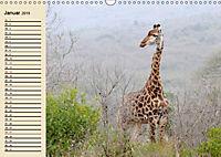 Afrika. Tiere in freier Wildbahn (Wandkalender 2019 DIN A3 quer) - Produktdetailbild 1