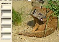 Afrika. Tiere in freier Wildbahn (Wandkalender 2019 DIN A3 quer) - Produktdetailbild 9