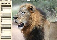 Afrika. Tiere in freier Wildbahn (Wandkalender 2019 DIN A3 quer) - Produktdetailbild 12