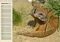 Afrika. Tiere in freier Wildbahn (Wandkalender 2019 DIN A4 quer) - Produktdetailbild 9