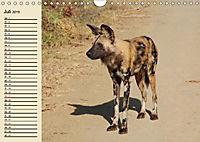 Afrika. Tiere in freier Wildbahn (Wandkalender 2019 DIN A4 quer) - Produktdetailbild 7