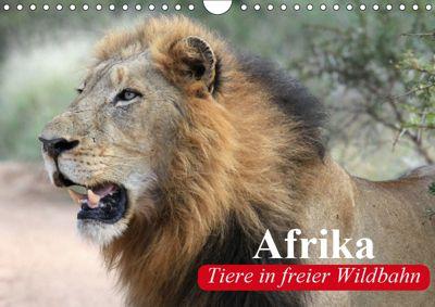 Afrika. Tiere in freier Wildbahn (Wandkalender 2019 DIN A4 quer), Elisabeth Stanzer
