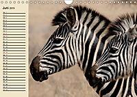 Afrika. Tiere in freier Wildbahn (Wandkalender 2019 DIN A4 quer) - Produktdetailbild 6