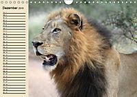 Afrika. Tiere in freier Wildbahn (Wandkalender 2019 DIN A4 quer) - Produktdetailbild 12