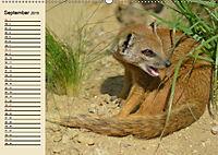 Afrika. Tiere in freier Wildbahn (Wandkalender 2019 DIN A2 quer) - Produktdetailbild 9