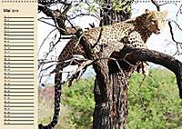 Afrika. Tiere in freier Wildbahn (Wandkalender 2019 DIN A2 quer) - Produktdetailbild 5