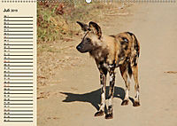 Afrika. Tiere in freier Wildbahn (Wandkalender 2019 DIN A2 quer) - Produktdetailbild 7