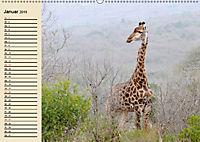 Afrika. Tiere in freier Wildbahn (Wandkalender 2019 DIN A2 quer) - Produktdetailbild 1