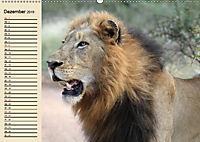 Afrika. Tiere in freier Wildbahn (Wandkalender 2019 DIN A2 quer) - Produktdetailbild 12