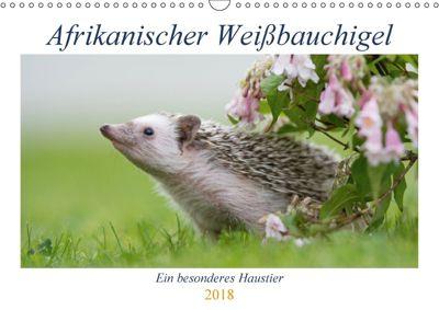 Afrikanische Weissbauchigel (Wandkalender 2018 DIN A3 quer), Andreas Zimmermann