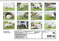 Afrikanische Weissbauchigel (Wandkalender 2018 DIN A3 quer) - Produktdetailbild 13